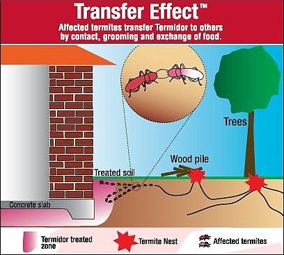 Termite Services Control Treatment Melbourne